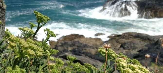 Coastal Wild
