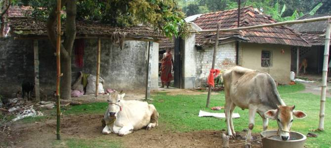 Add cows, subtract chemicals: organic farming a plus for climate-hit Indian farmers
