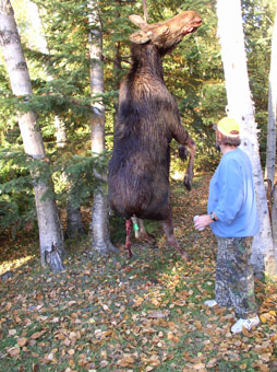 Moose Hunt in Ontario