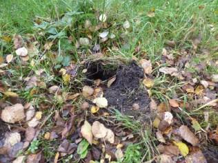 Badger snuffle hole