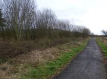 Brash hedge