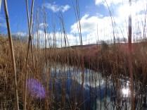 Sun on a reedy ditch