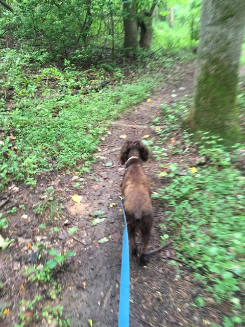 Walking the Dog on Trails in Charlottesville's Lochlyn Hill