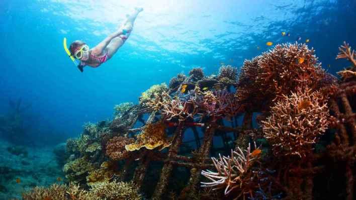 藍夢島攻略 - 浮潛