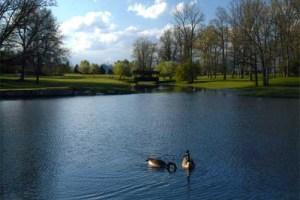 2 Locust pond