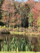 East-small-lake