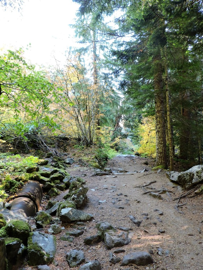 The Carter Falls Trail