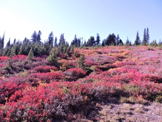 fall wildflowers at our Paradise lunch stop