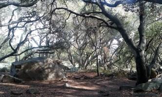 Beautiful oak grove