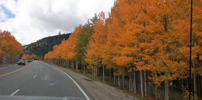 Aspens line US 50 on the way towards Monarch Pass