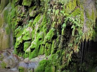 Beautiful Gorman Falls