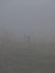 Dog in fog © Lodewijk Muns 2014