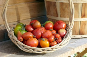 The Lodge at Woodloch's Farm to Table Garden-Fresh Tomatoes