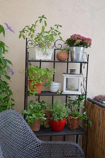 kr uter koriander balkon 01 02 52. Black Bedroom Furniture Sets. Home Design Ideas
