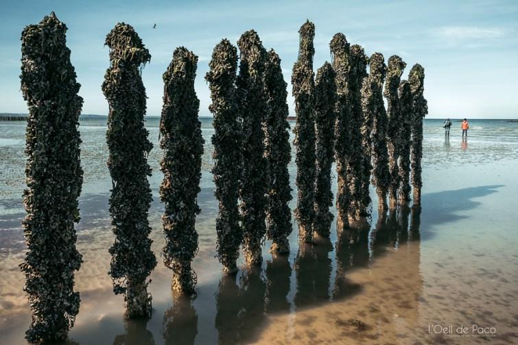 Photo #256 - Tout au bout des bouchots de la Baie de Saint-Brieuc