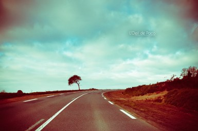 Photo #314 - Alone on the road