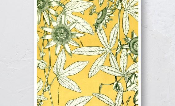 Passiflora Plakat Skandynawski