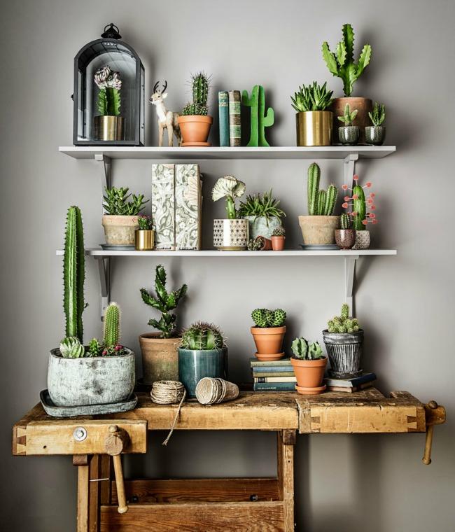 Ideas para decorar tu hogar con cactus