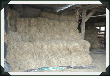 hay in barn