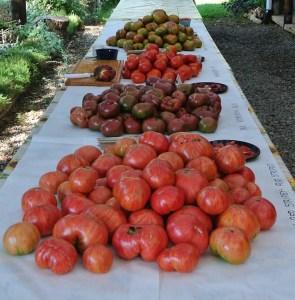 tomato table