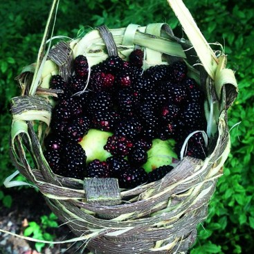 Yes_I_did_make_that_basket_from_bark_and_forage_berries_on_the_roadside.__truestory