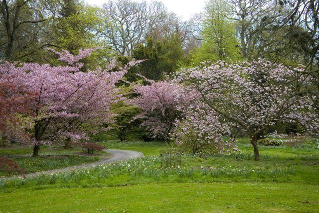 Batsford Arboretum In May