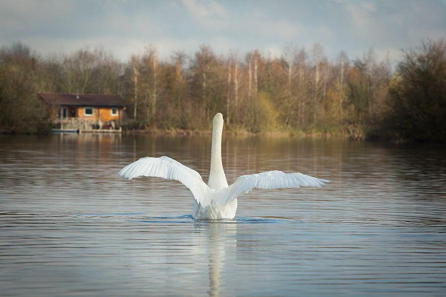 Romantic Lakeside Lodges