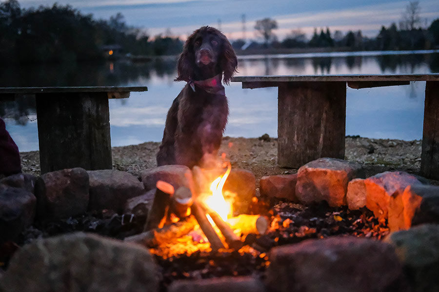 UK Dog Friendly Cabins