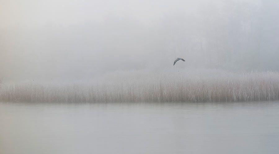 Bird Holidays South England