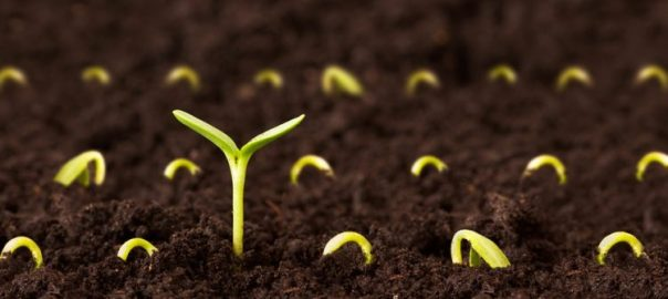 sowing-seeds-750x4001