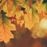 Comincia l'autunno con le promozioni LogiSS