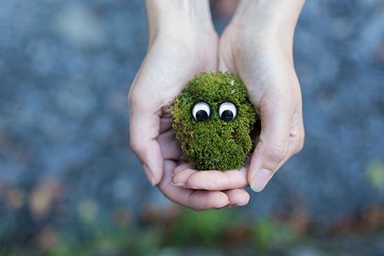 admettre l'écologie