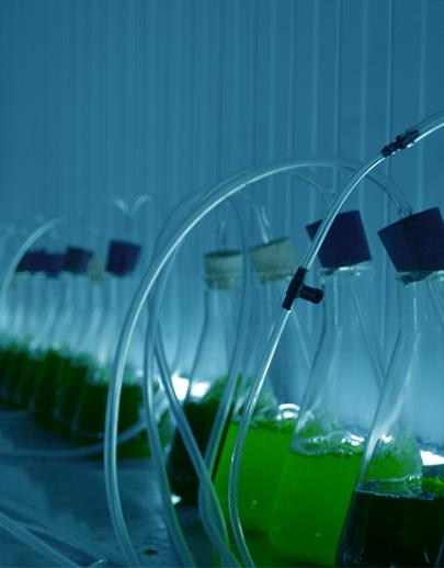 Ferme d'algues