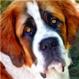 St Bernard Dog Photo Painting Prints, Cards, Trays, Buttons, Stickers, Magnets, and more!