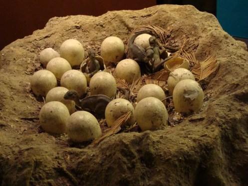 Maiasaura_Nest_Model.001_-_Natural_History_Museum_of_London.wikipedia