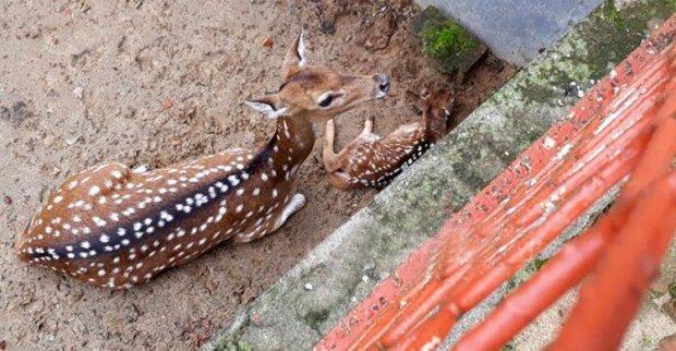 Chittagong-Zoo20170707114610