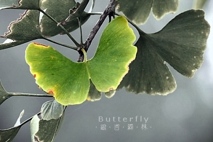 gingko-forest