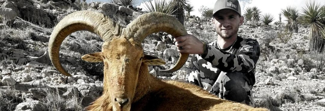 BARBARY SHEEP HUNTS