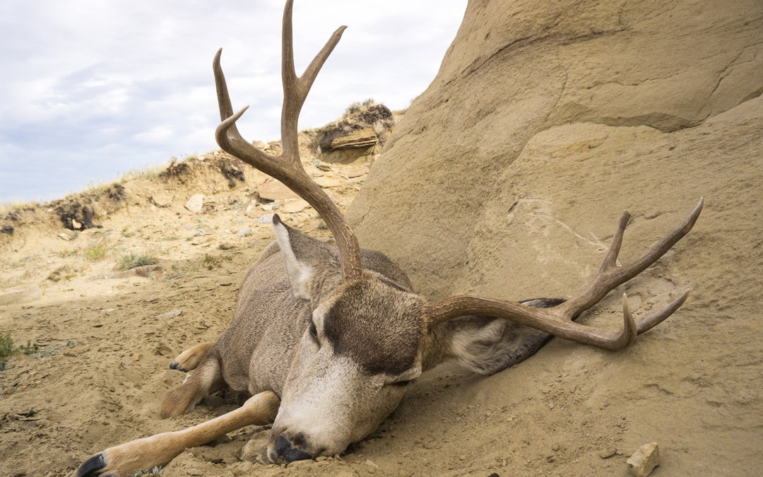 4 Things to Expect on a New Mexico Mule Deer Hunt