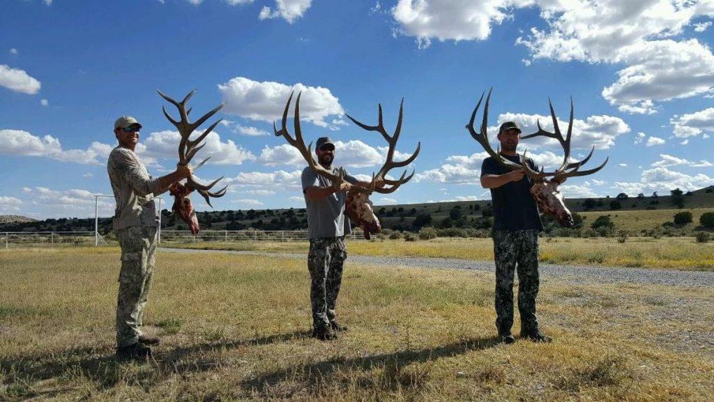 New Mexico Unit 17 Elk