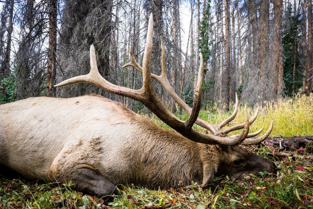 Elk Hunting Success