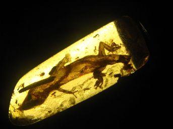 Oligocene-era gecko trapped in amber