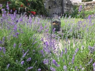 Lavender Beds