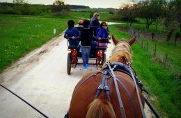 attelage cheval en region centre devenir rédacteur web de loirexplorer