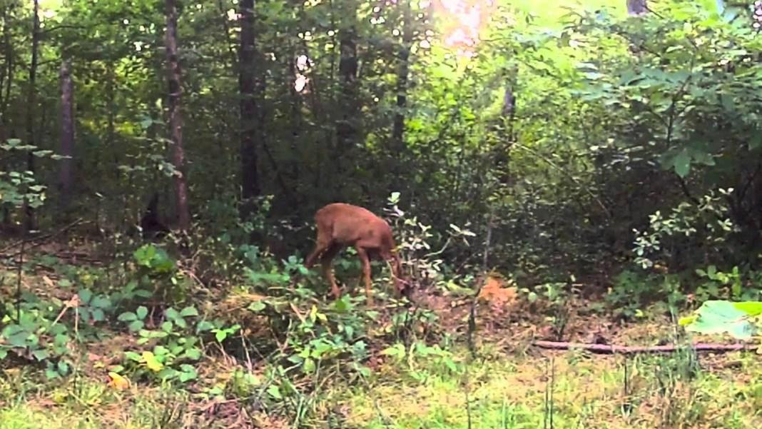 7 règles insolites pour observer les animaux sauvages du Val de Loire