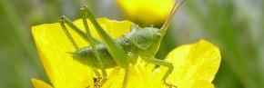 comment observer les animaux sauvages en forêt du Val de Loire