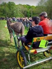 Foire aux ânes Poulaines Indre Berry avec LoireXplorer concours d'attelage