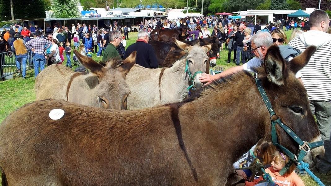 Fête des Anes de Poulaines, l'équitation avec un âne