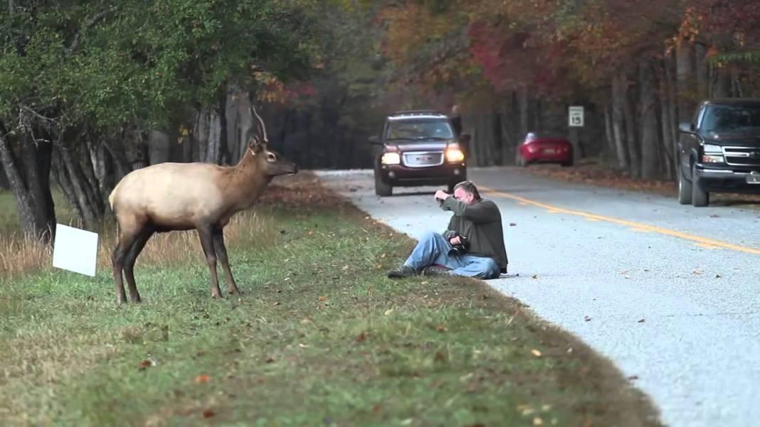 Quand un photographe rencontre un cerf en forêt
