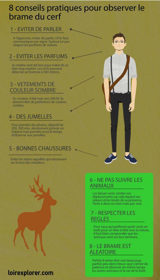 guide pratique comment et où obsrever le brame du cerf en Sologne et région Centre